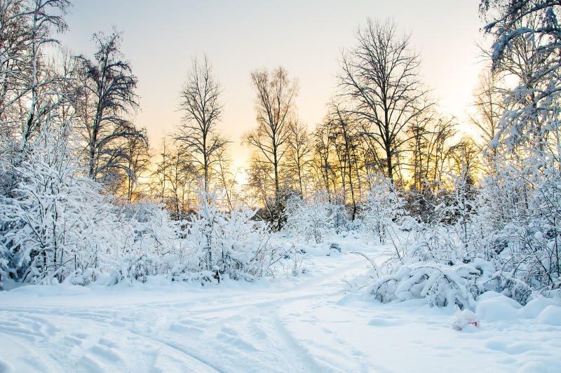 Den snöig skogen arkivbilder