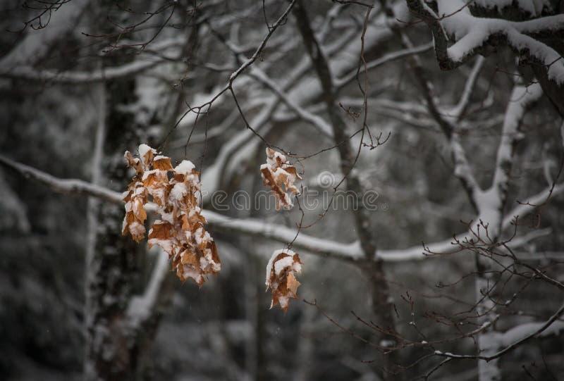 Den snöig vintern landskap fotografering för bildbyråer