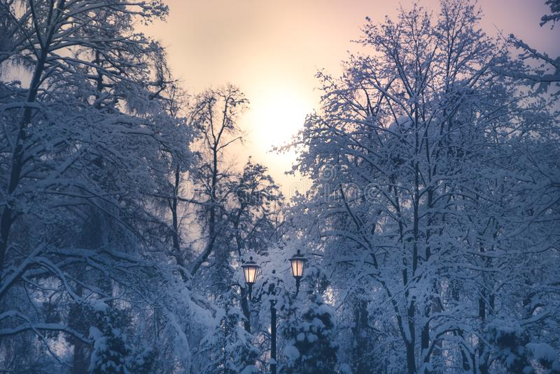 Den snöig vintern parkerar platsgataljus, träd för lyktasolnedgång somskymning täckte insnöade mjuka blåa purpurfärgade färger arkivfoto