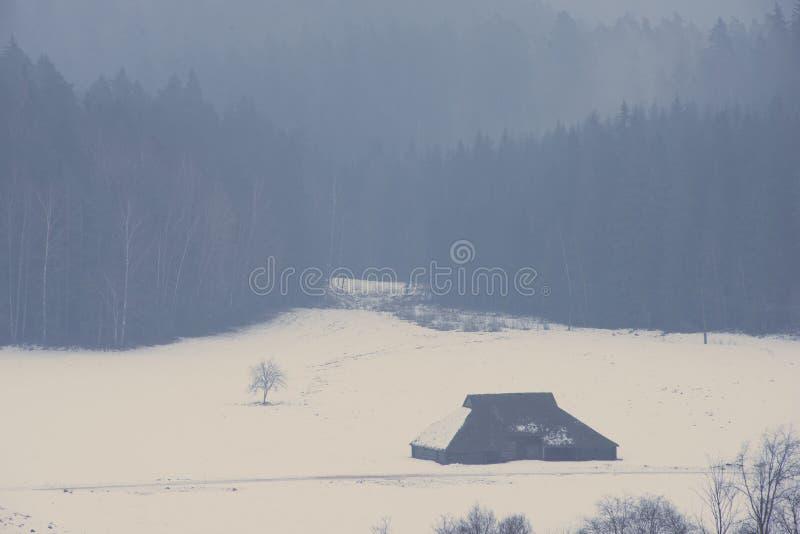 Den snöig vinterskogen med snö täckte träd - åldrigt foto royaltyfria bilder