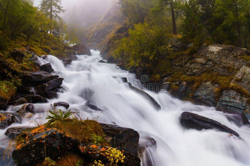 Den snabba och kalla bergfloden som flödar mellan mossigt, vaggar och gröna träd i den Altai republiken arkivfoton