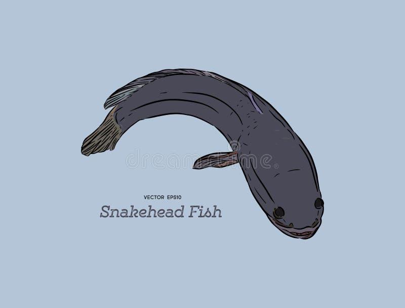Den Snakehead fisken, handattraktion skissar vektorn royaltyfri illustrationer