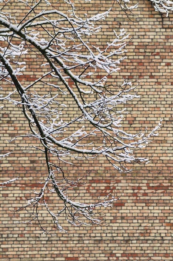 Den Snow täckte treen förgrena sig arkivfoton
