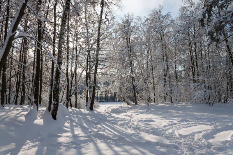 Den soliga dagen i vinter parkerar arkivfoton