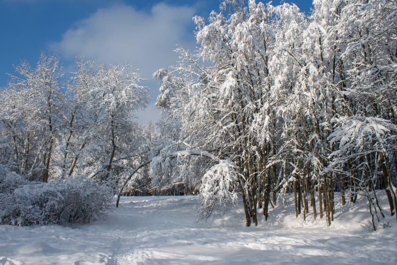 Den soliga dagen i vinter parkerar royaltyfria bilder