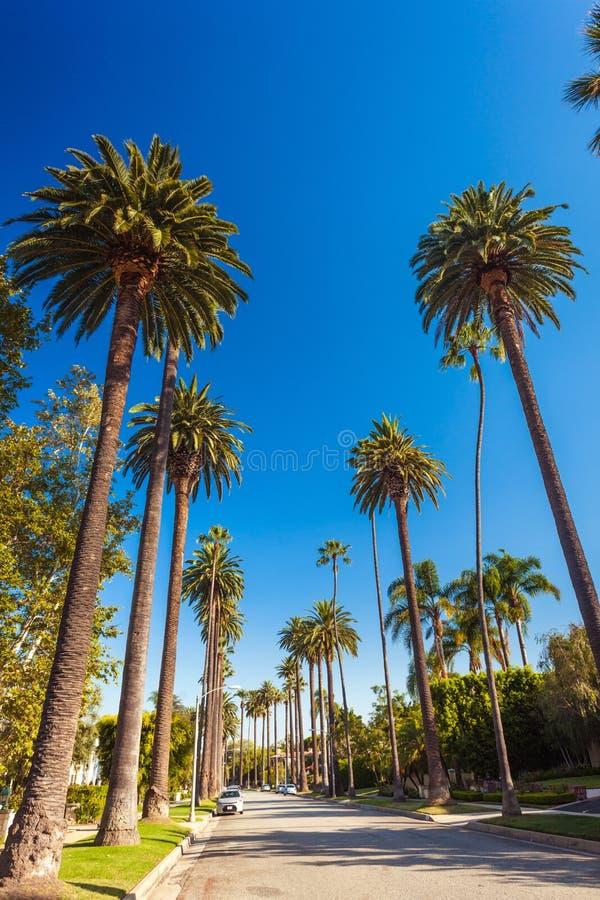 Den soliga gatan av Beverly Hills med gömma i handflatan royaltyfri fotografi