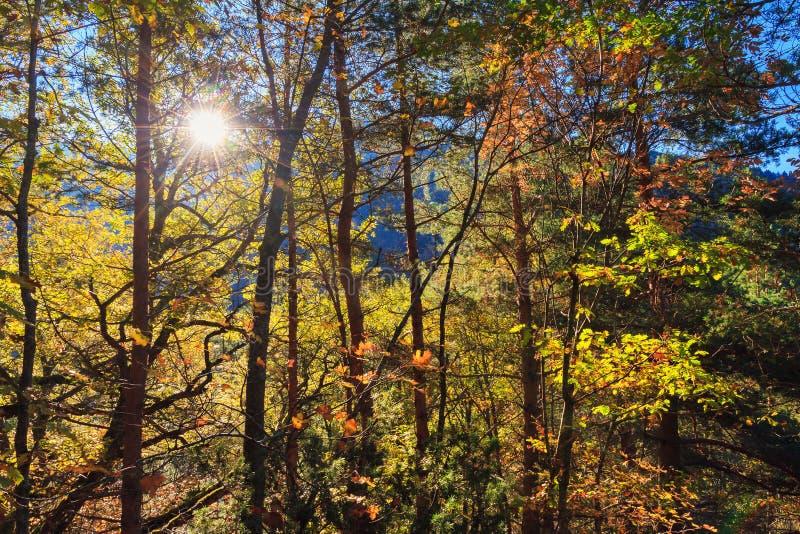Den soluppgångRila naturen parkerar royaltyfri fotografi