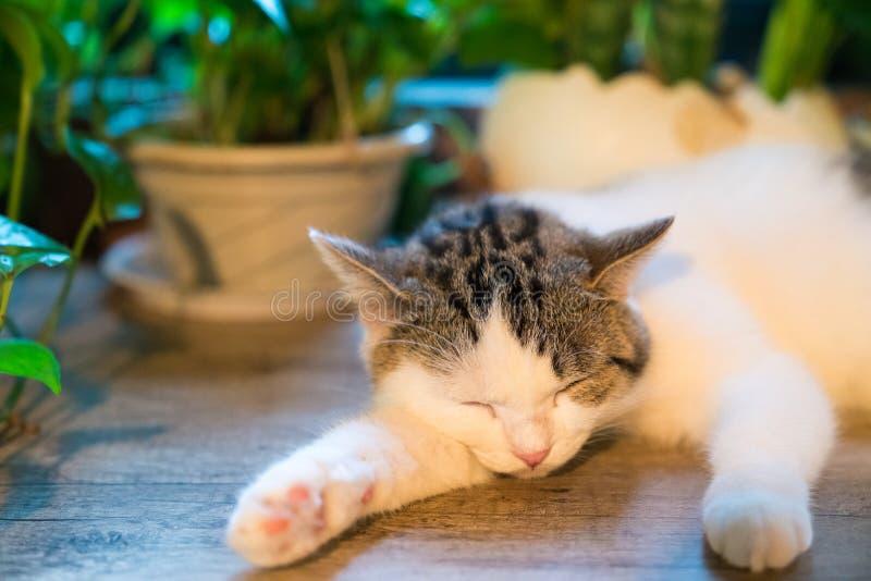 Den sova katten royaltyfri foto