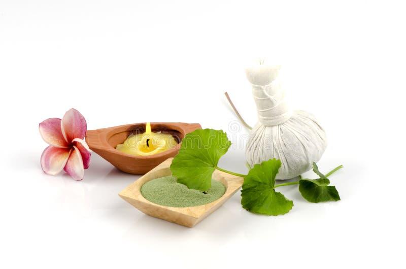 Den Spa kroppen skurar med grönt asiatica te och Centella för att fördröja skrynklor. royaltyfri foto