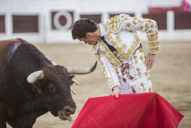 Den spanska tjurfäktareDaniel Luque bullfightingen med crutcen arkivbilder