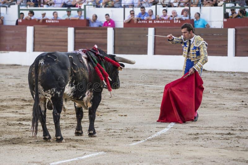 Den spanska tjurfäktaren David Fandila El Fandi som förbereder sig till ente royaltyfria bilder