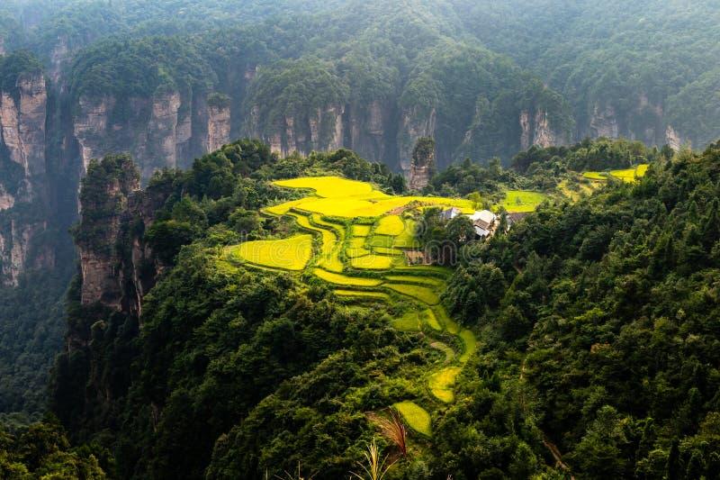 Den spektakulära risfältet terrasserar framme av den Laowuchang byn, i Yuanjiajie område av den Wulingyuan nationalparken, Zhangj fotografering för bildbyråer