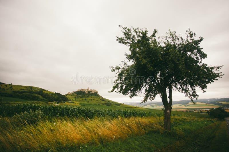 Den Spisske Podhradie staden och Spis rockerar Spissky hrad, den Presov regionen, Slovakien Sikt av slotten från vägen som leder  arkivbilder