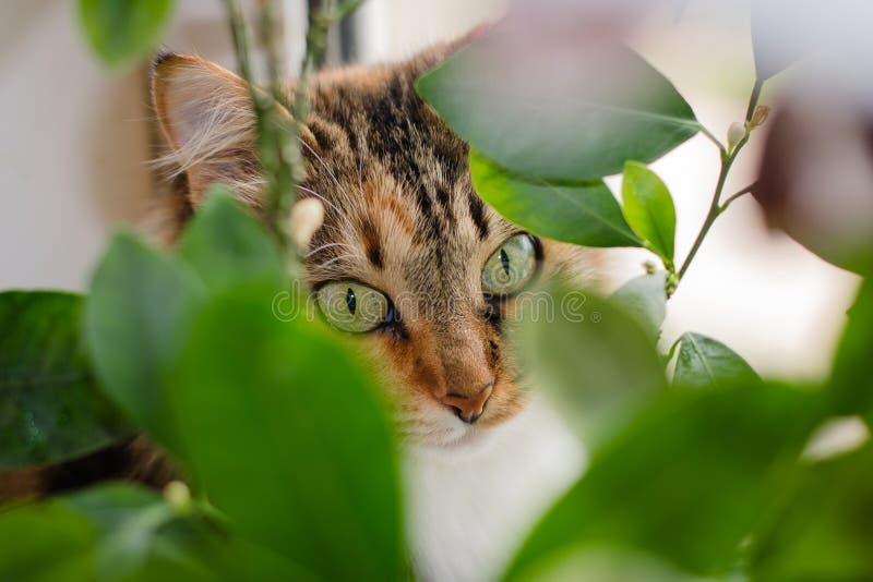 Den spräckliga katten med härliga gröna ögon arkivbild