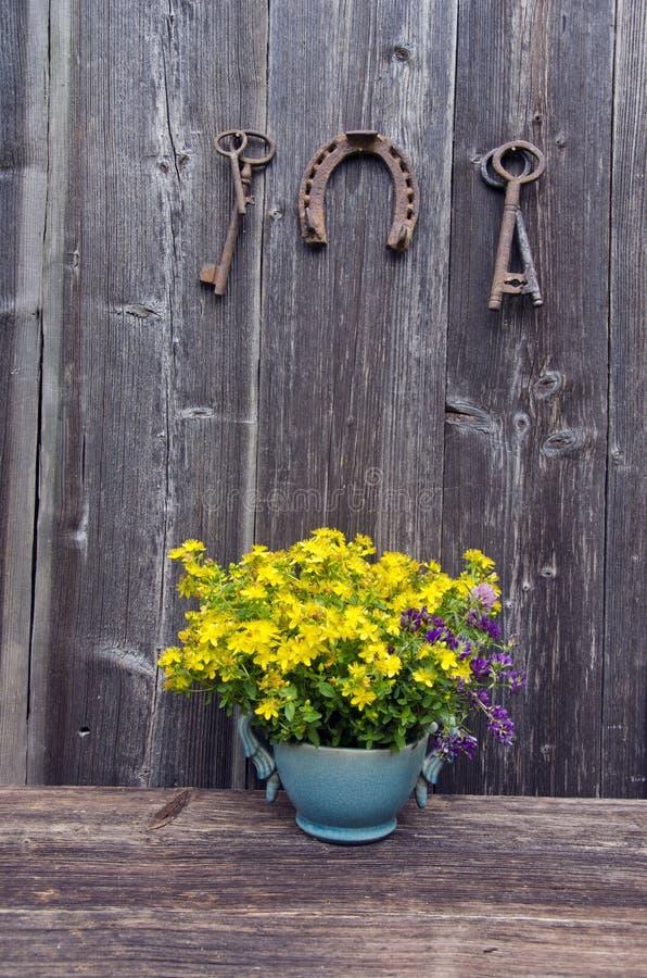 Den St Johns wortläkarundersökningen blommar i vas och antikvitethästsko med tangent royaltyfri bild