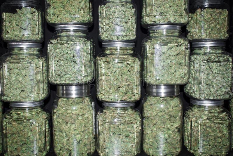 Den staplade väggen av exponeringsglaskrus fyllde med gröna marijuanaknoppar arkivbild