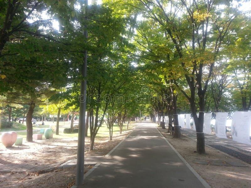 Den stenlade fot- vägen eller går vägen med träd på sidor för allmänhet går arkivfoto