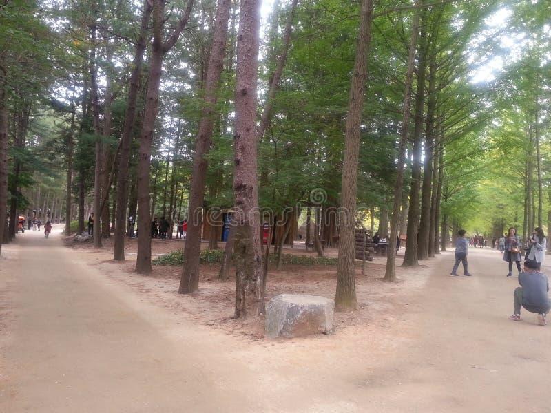 Den stenlade fot- vägen eller går vägen med träd på sidor för allmänhet går royaltyfria foton
