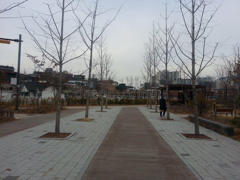 Den stenlade fot- vägen med träd på sidor för allmänhet går royaltyfri bild