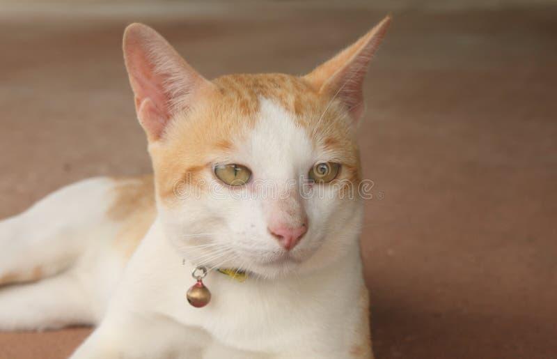 Den stiliga katten tänker av något royaltyfri bild