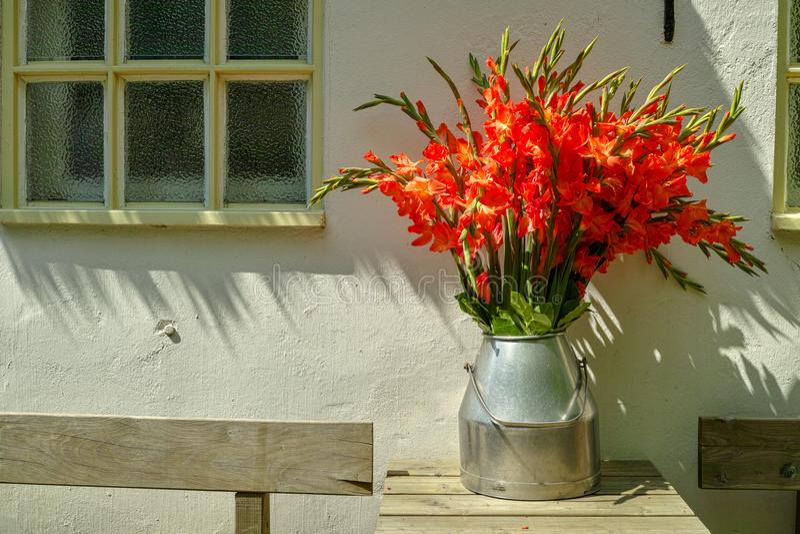 Den stora buketten av röda gladiolusblommor i gammalt mjölkar kan på tabellou arkivbild