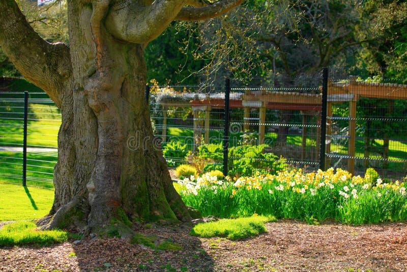 Den stora ekstammen är i trädgården, ingrepp på bakgrunden royaltyfri foto
