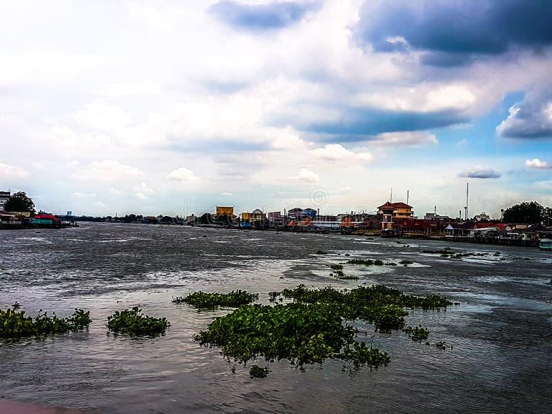 Den stora floden, vattenhyacinten och bakgrunden för blå himmel arkivfoton