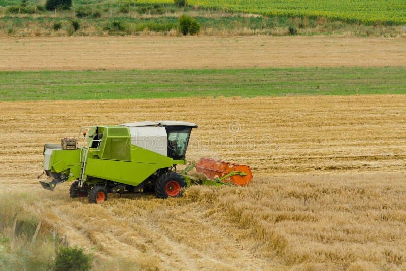 Den stora gröna skördetröskamaskinen som arbetar i ett guld- fält för vete, mejar gräs i sommarfält Lantgårdmaskineri som in skör royaltyfria bilder