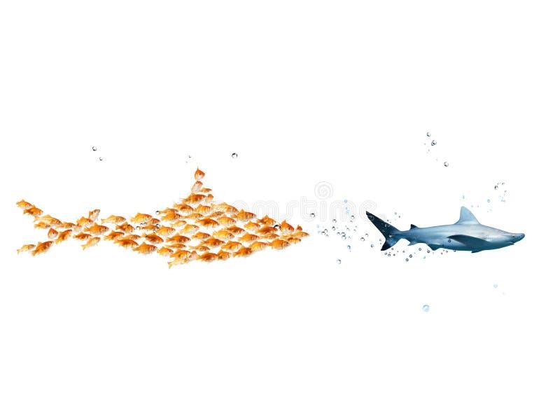 Den stora hajen som göras av guldfiskar, anfaller en verklig haj Begreppet av enhet är styrka, teamwork och partnerskap arkivfoton