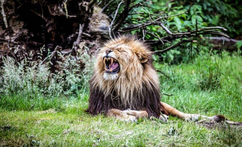 Den stora konungen fotografering för bildbyråer