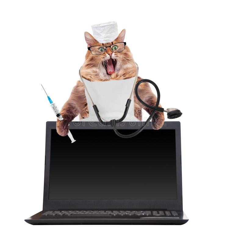 Den stora lurviga katten är det mycket roliga anseendet Bärbar dator arkivbilder
