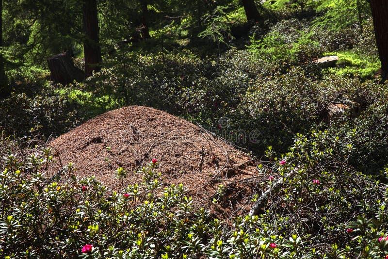 Den stora myrakullen i trä arkivbilder