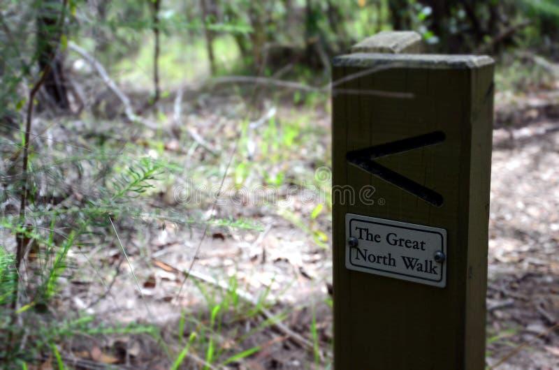 Den stora norden går Bushwalking i grändliten viknationalpark royaltyfria foton