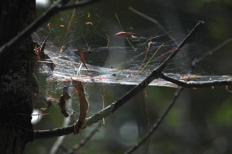 Den stora och nästan fasta spindelrengöringsduken tände från över royaltyfria foton
