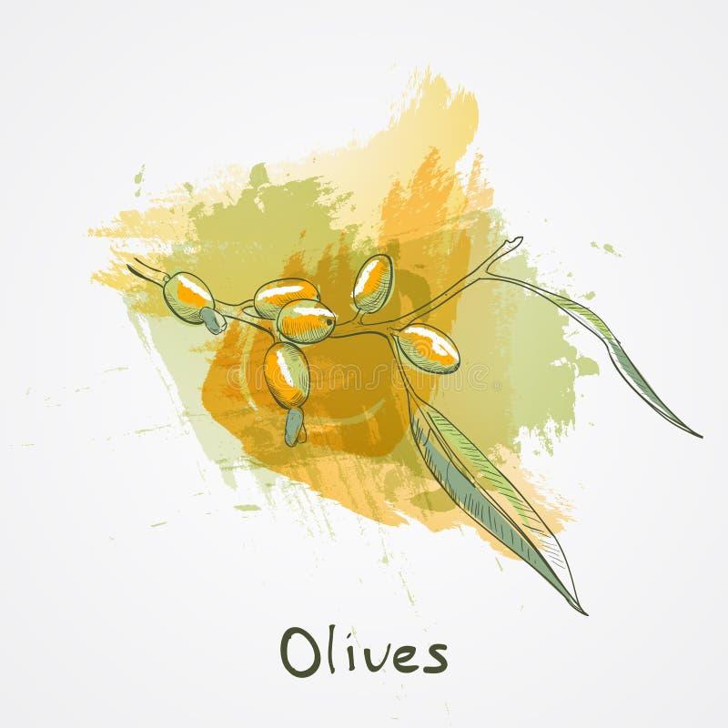 Den stora olivgröna filialen skissar vektorillustrationen, den isolerade olivhanden som dras, tappningolivträd med sidor med vatt stock illustrationer
