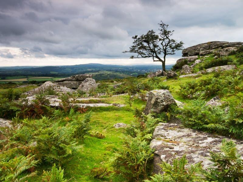 Den stormiga dramatiska aftonen på Dartmoor, vaggar bräken och royaltyfri fotografi