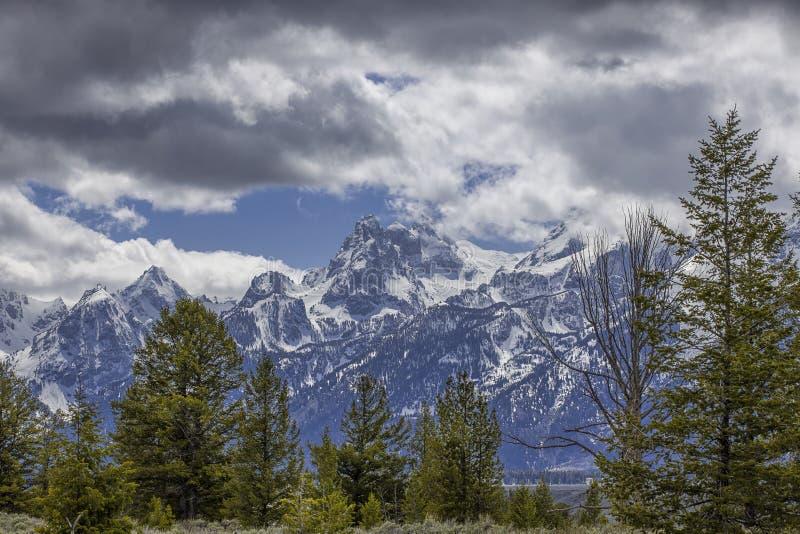 Den storslagna Tetonsen av Wyoming royaltyfri foto