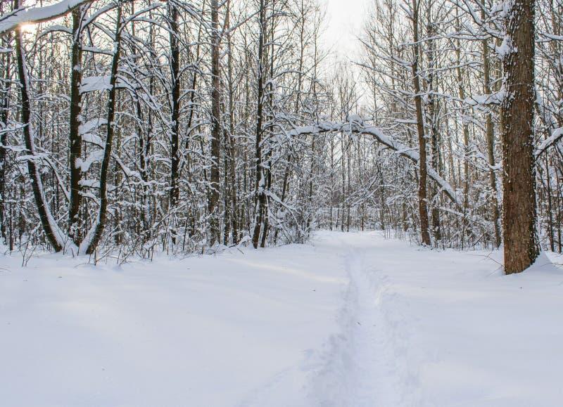 Den stupade snön har vridna filialer av träd arkivbilder