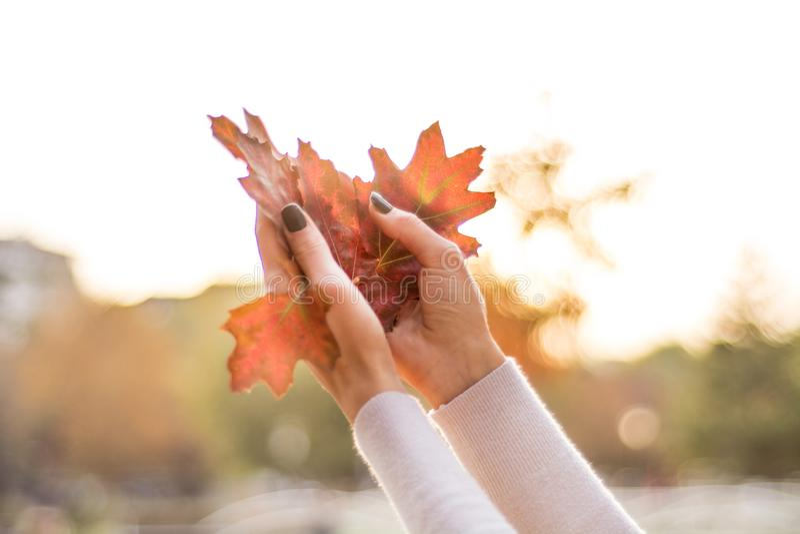 Den stupade torra hösten spricker ut i ung flickahänder i luft royaltyfri fotografi