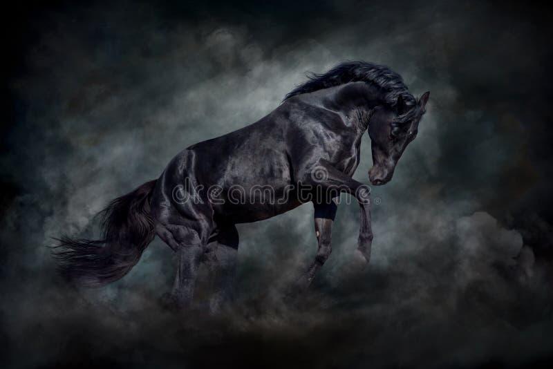 Den svart hingsten vinkar in royaltyfria bilder