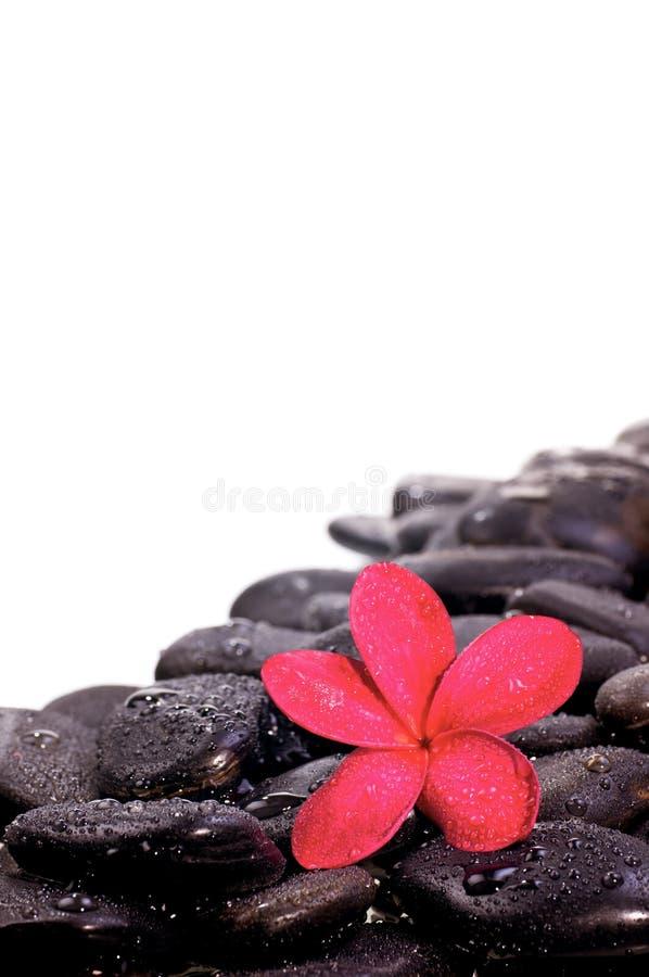 den svarta blomman stenar zen arkivfoto