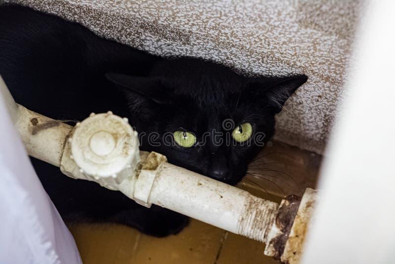 Den svarta förskräckta katten dolde bak röret arkivbilder