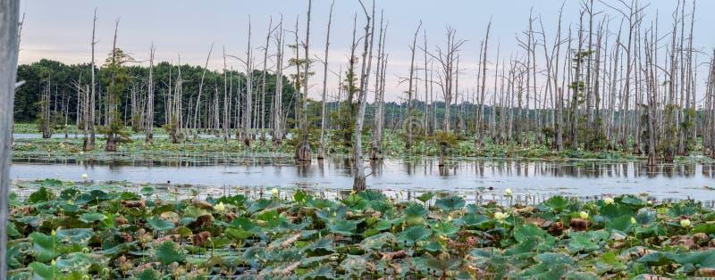 Den svarta flodarm sjön är en fristad för fiskare` s royaltyfria bilder