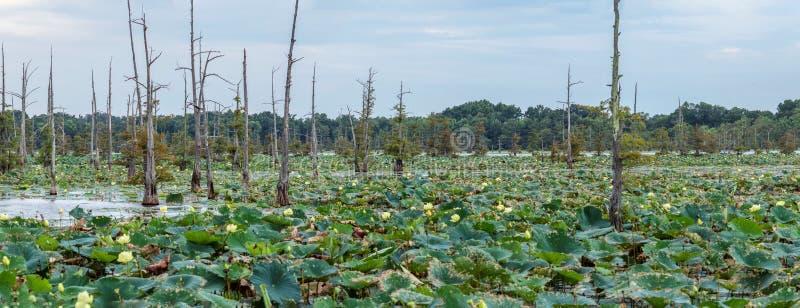 Den svarta flodarm sjön är en fristad för fiskare` s fotografering för bildbyråer