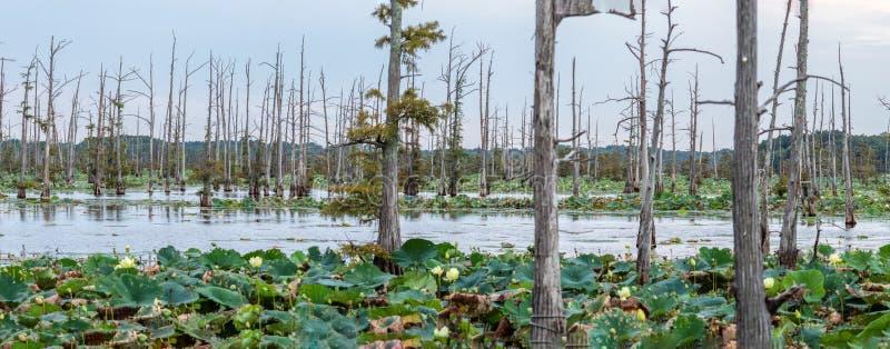 Den svarta flodarm sjön är en fristad för fiskare` s arkivbilder