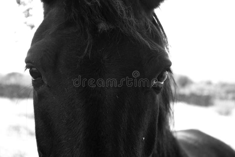 Den svarta hästen nära beklär arkivfoto
