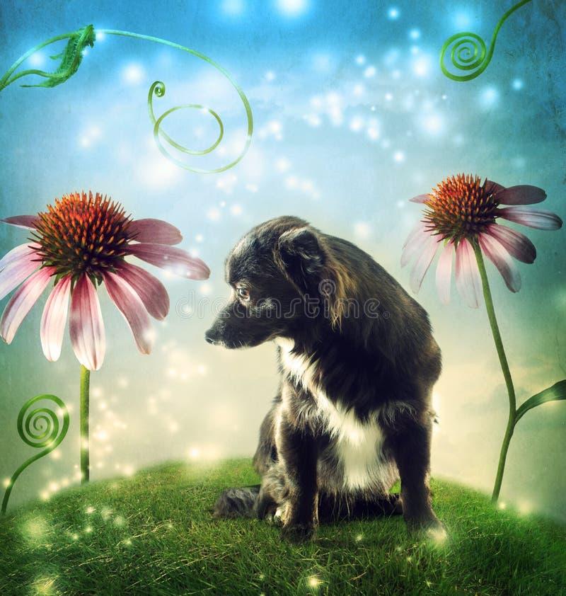 Den svarta hunden i en fantasibergstopp med echinaceaen blommar arkivbilder