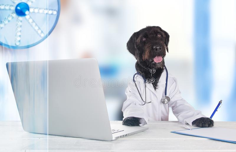 Den svarta hunden klädde som ett doktorssammanträde bak tabellen royaltyfria foton