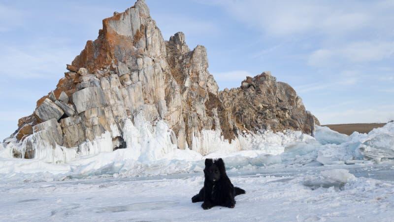 Den svarta hunden ligger på dentäckte isen av Lake Baikal på udde Burhan, och Shamanka vaggar arkivbilder