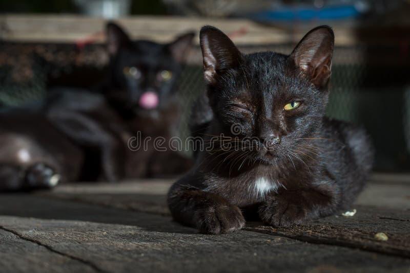 den svarta katten är sjukt ligga på det trä royaltyfri foto